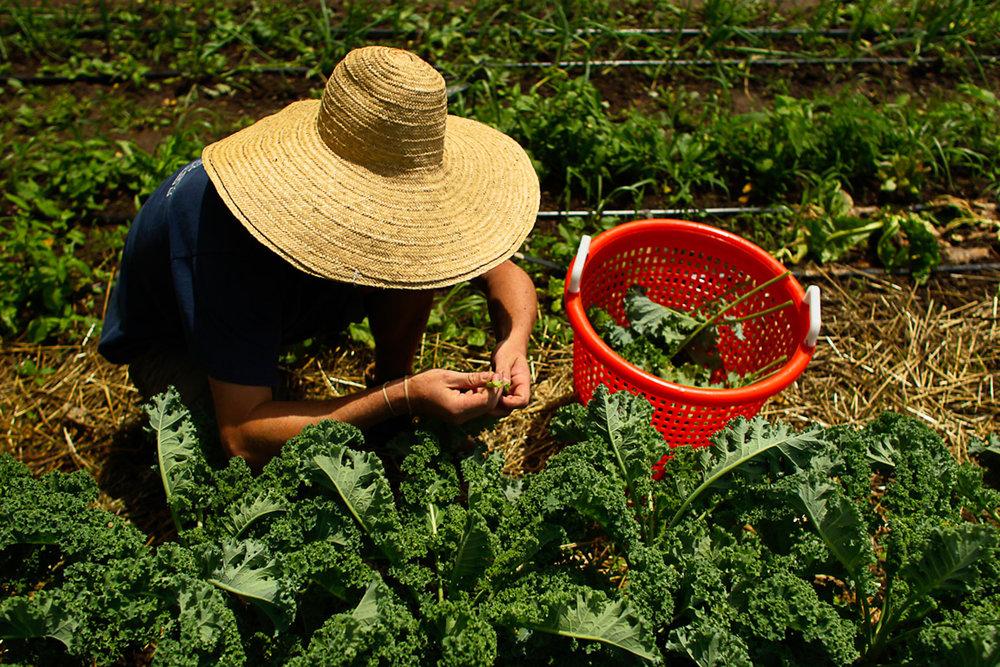 working on a farm.JPG