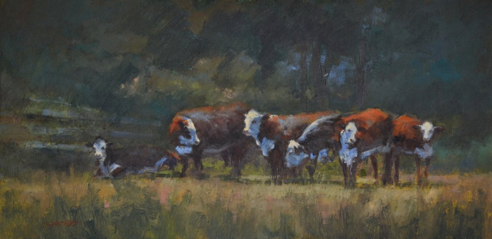 Bull and Herefords