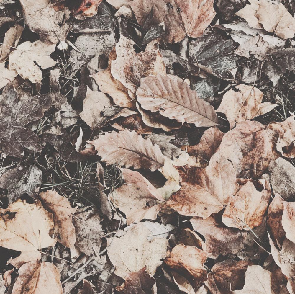 breathejane-inspiration-fall2.jpg