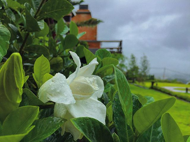 🍃🌿🌲🥀🌹🥀🍀🌺 ช่วงนี้หน้าฝน หมอกลง ดอกไม้ที่คีรีปุระกำลังบานเลยยยนะเนี่ยย 🌿🌲🌷🍃🌸🌺🌹🌷🥀🍁🍂🌾 - - - #thailand #travel #khaokho #amazingthailand #flowers #lovenature #nature #green #freshair