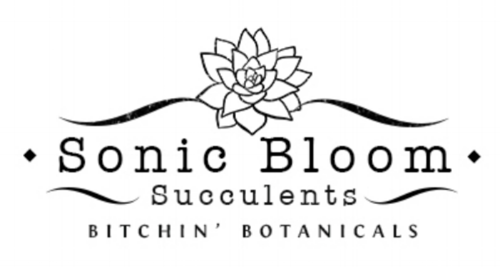 Sonic Bloom Succulents