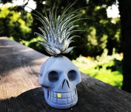 skullplanter.jpg