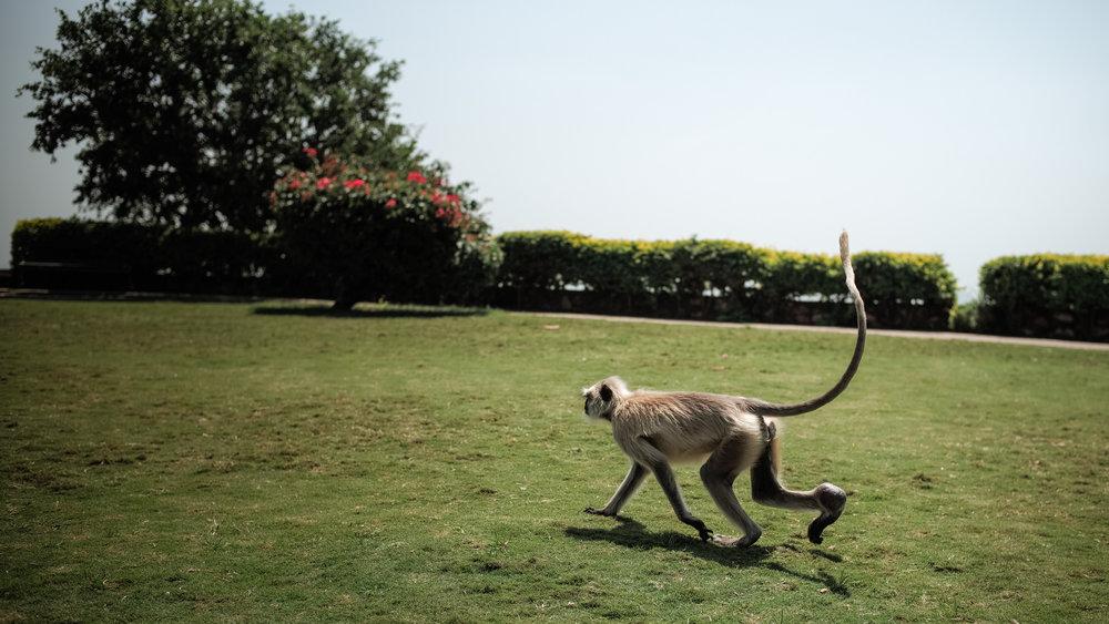 India_2018-257.jpg