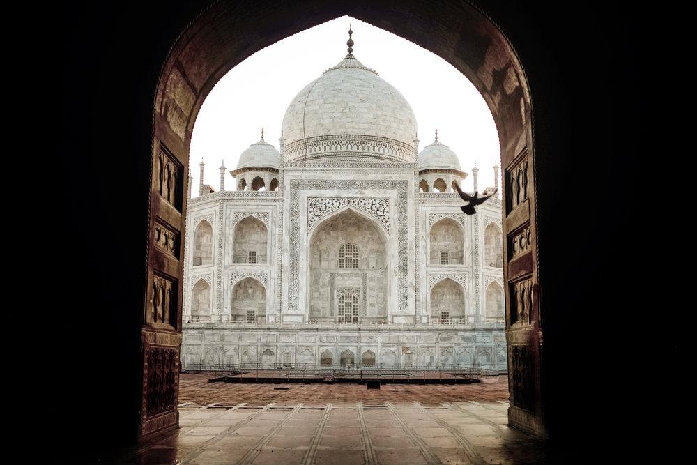 India_2018-490.jpg