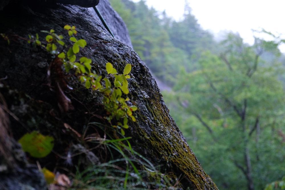 Climbing04-16.jpg
