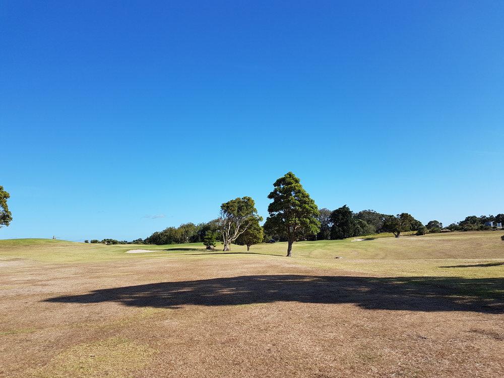 New Zealand golf scene
