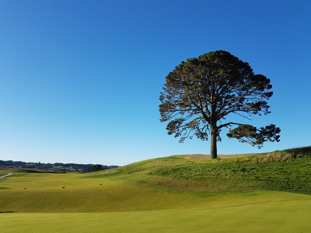 Beautiful golf scene in New Zealand