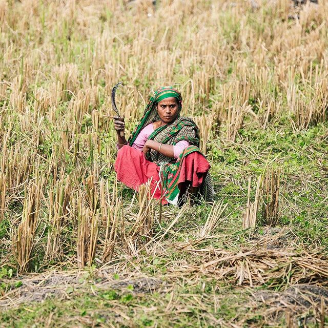 More than have the population of Bangladesh is composed by farmers. #bangladesh #change #nonprofit #nothingisordinary #changemakers