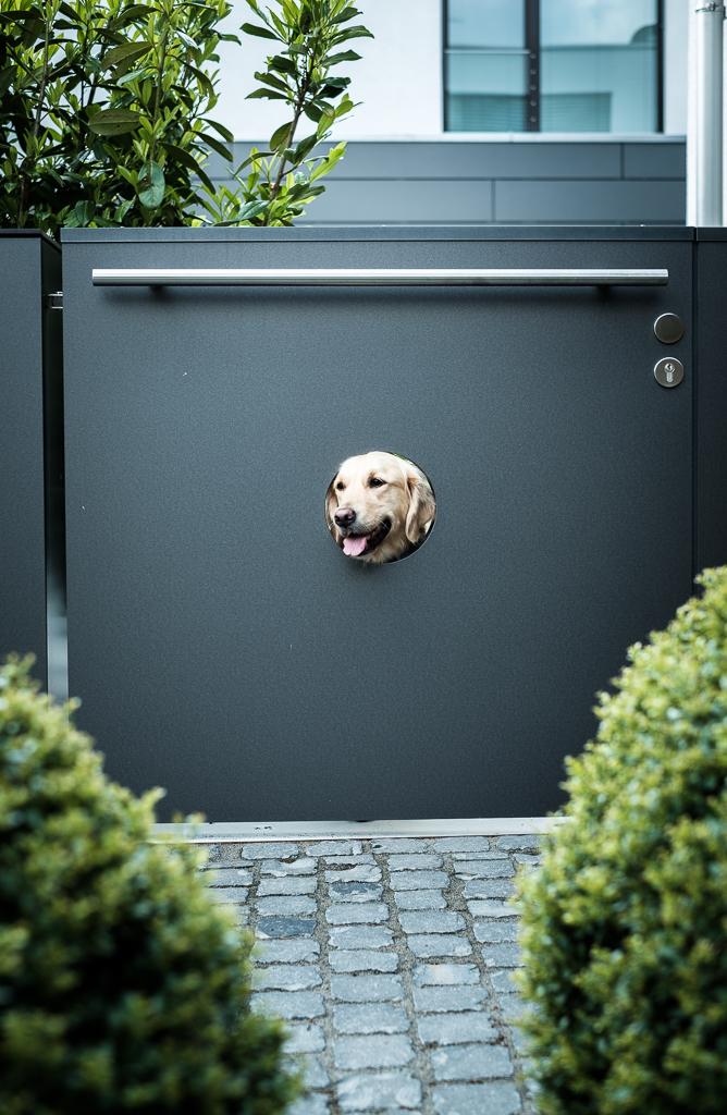 We love dogs   Eine Sonderlösung für den Liebling