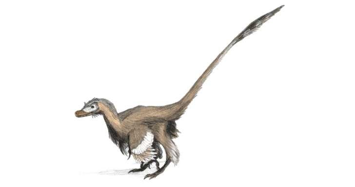 Velociraptor nykytieteen valossa. Kuva:Wikimedia Commons.