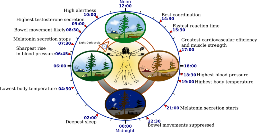 Circadian Biology - Chronobiology