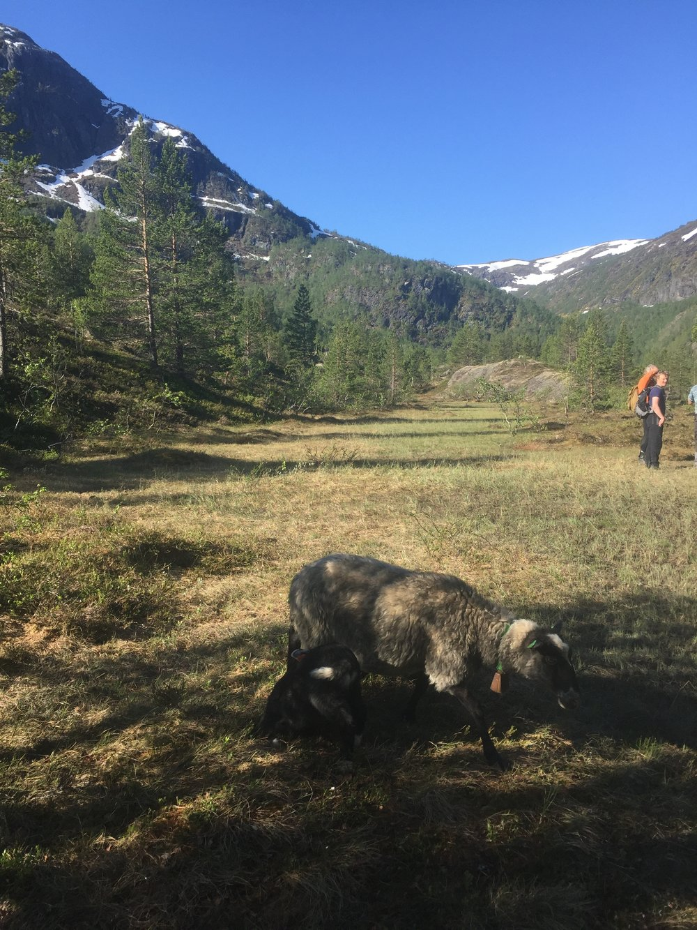 Buføring til Øyane i Flåmsdalen førre helg