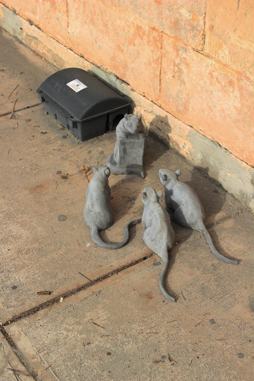 Rats on Site 6 Edit.jpg