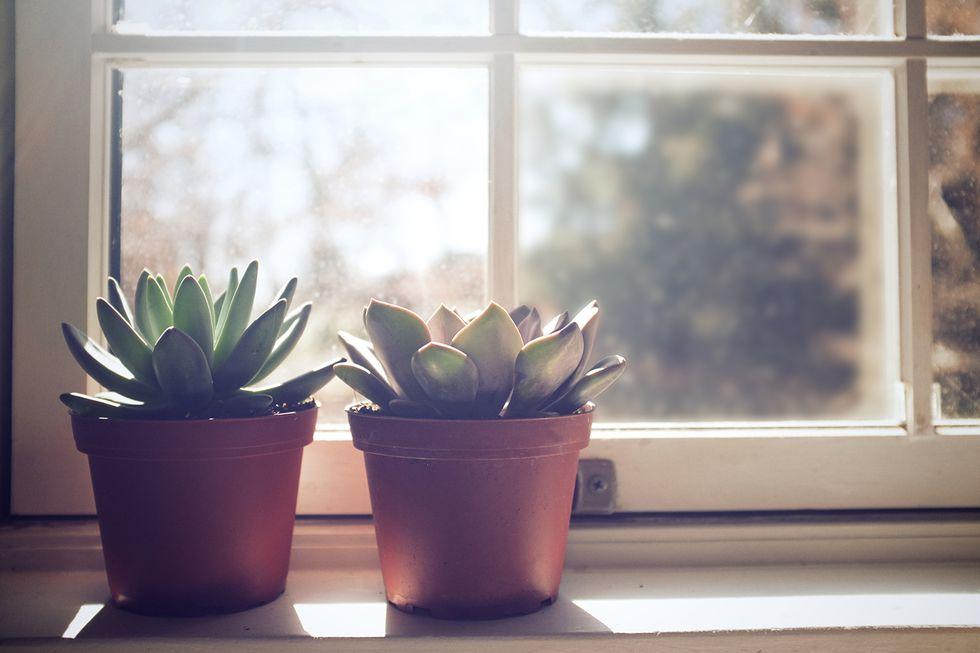 plants-1521230987.jpg