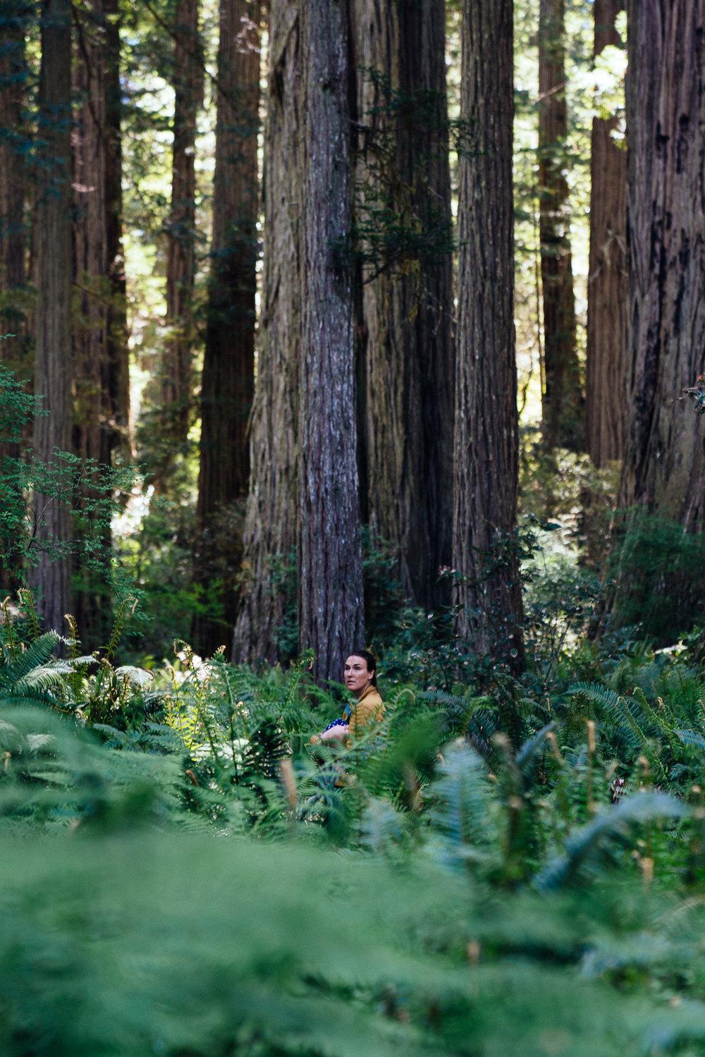 redwoods-25.jpg