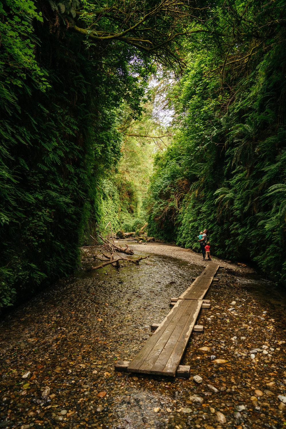 redwoods-86.jpg