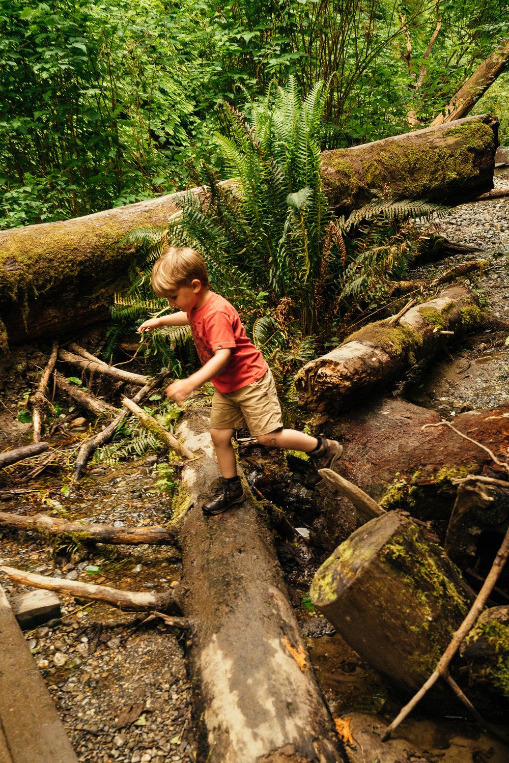 redwoods-96.jpg