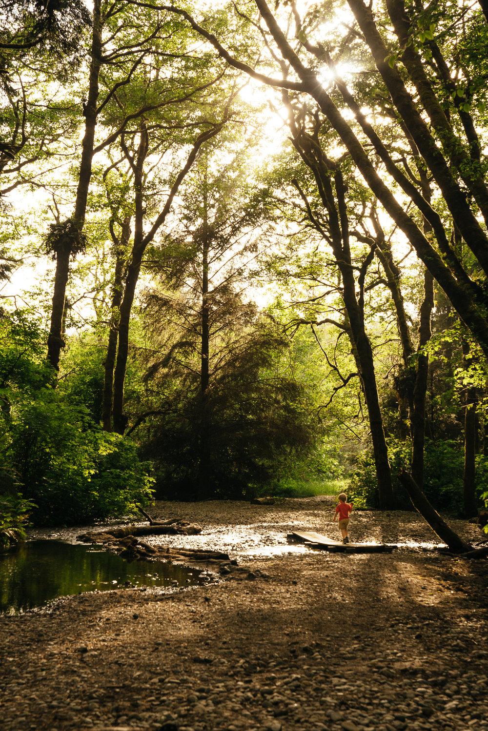 redwoods-99.jpg