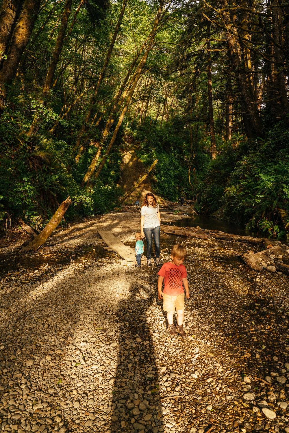 redwoods-101.jpg