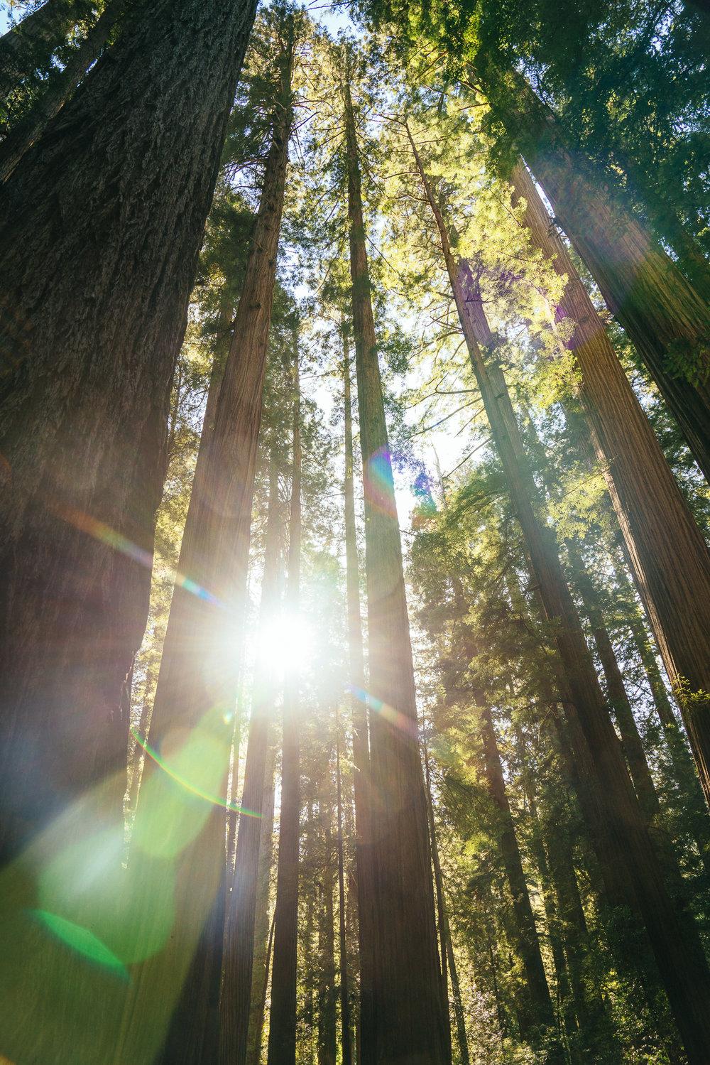 redwoods-110.jpg