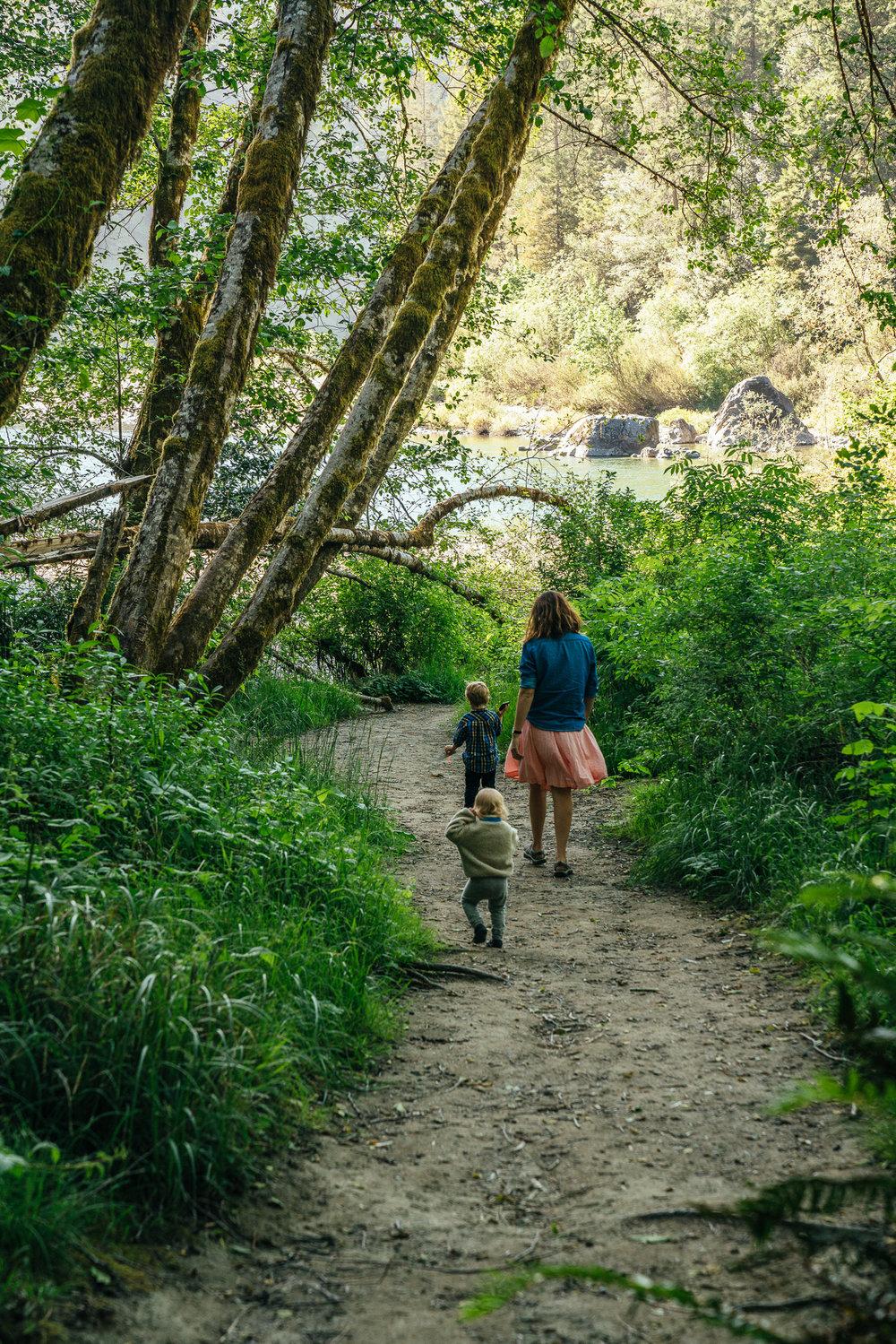 redwoods-113.jpg