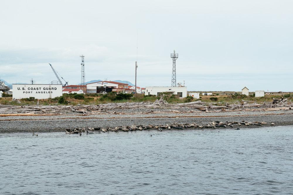 Harbor seals.