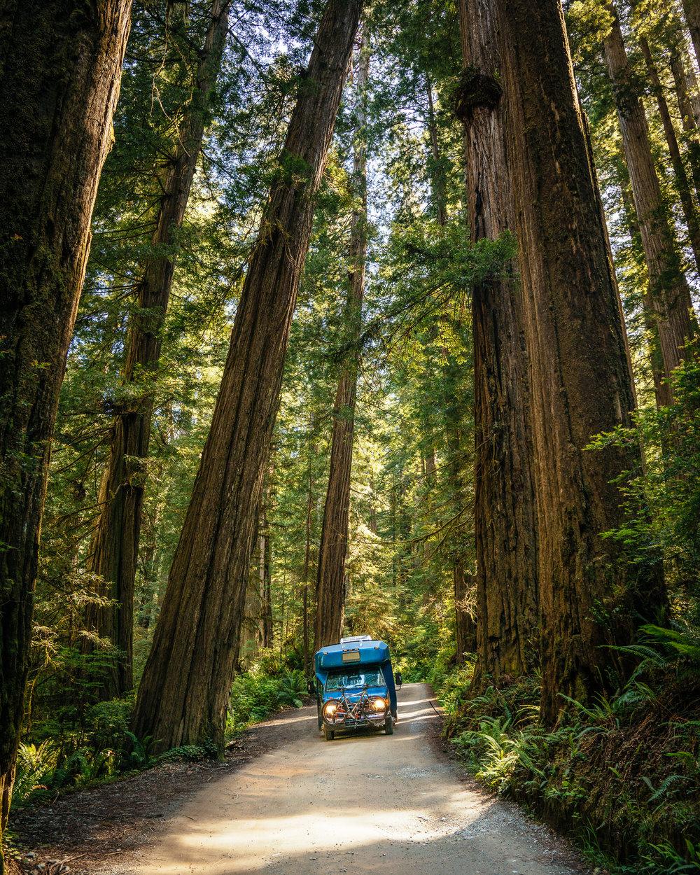 redwoods-106.jpg