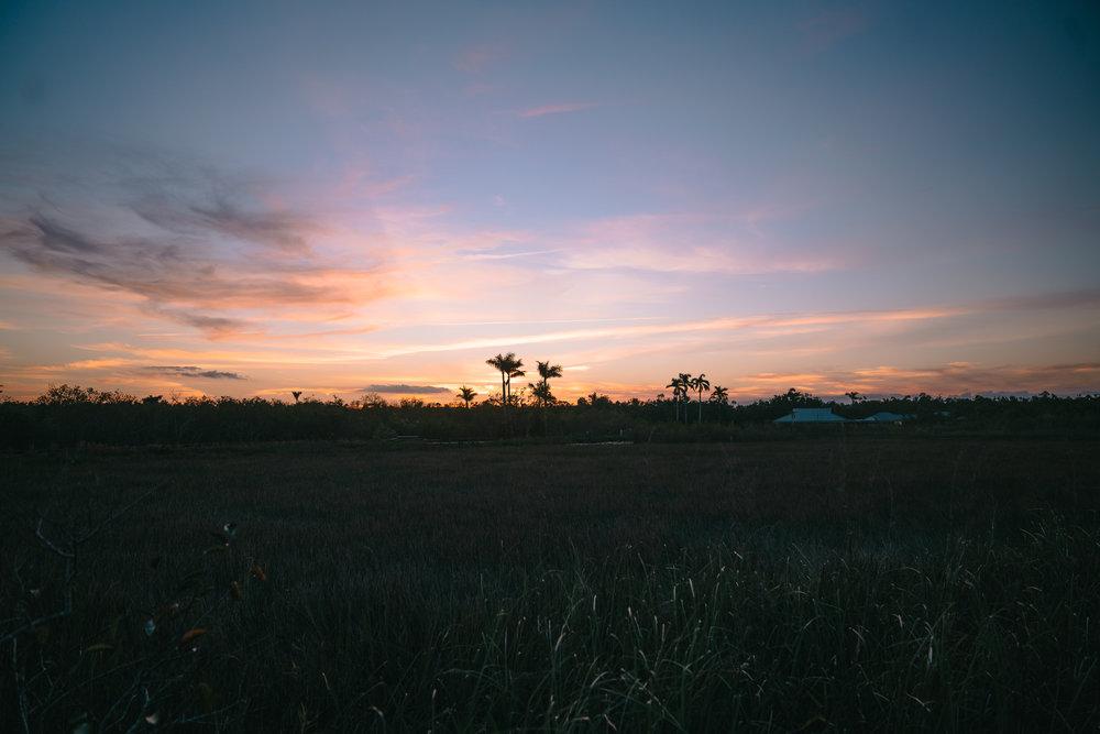 everglades-7.jpg
