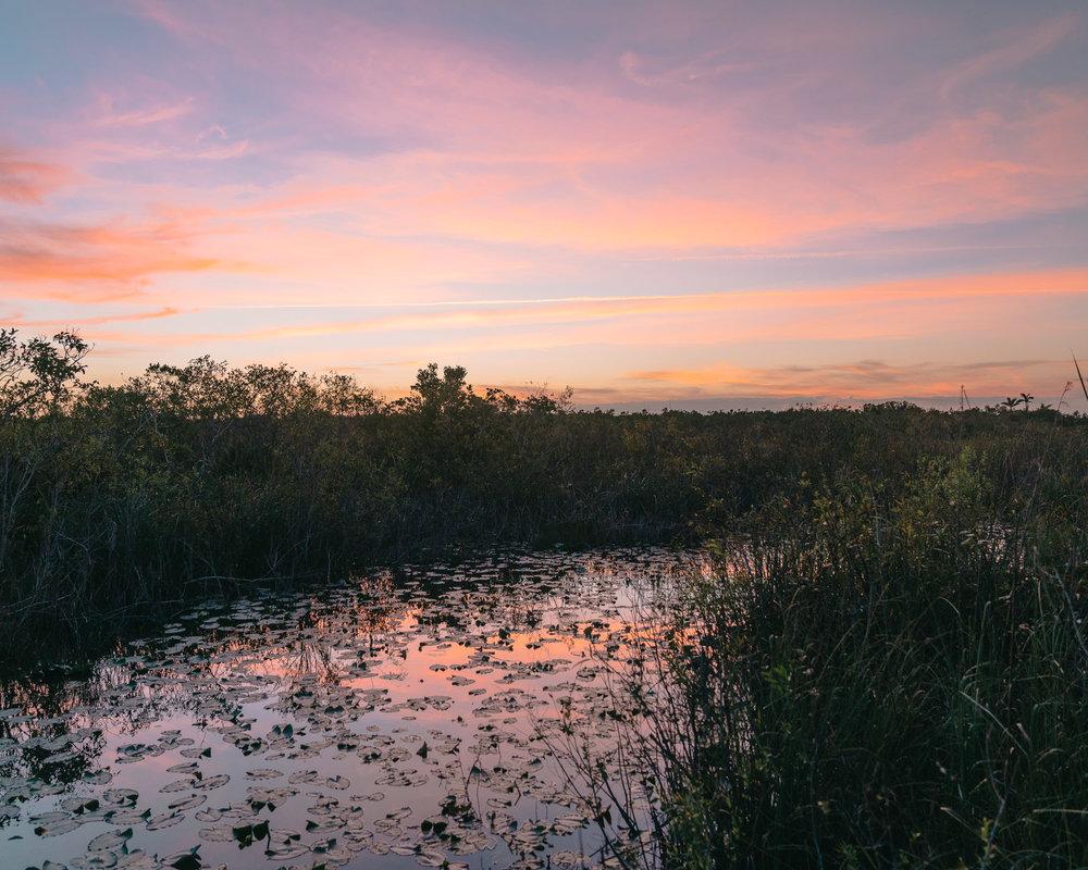 everglades-15.jpg