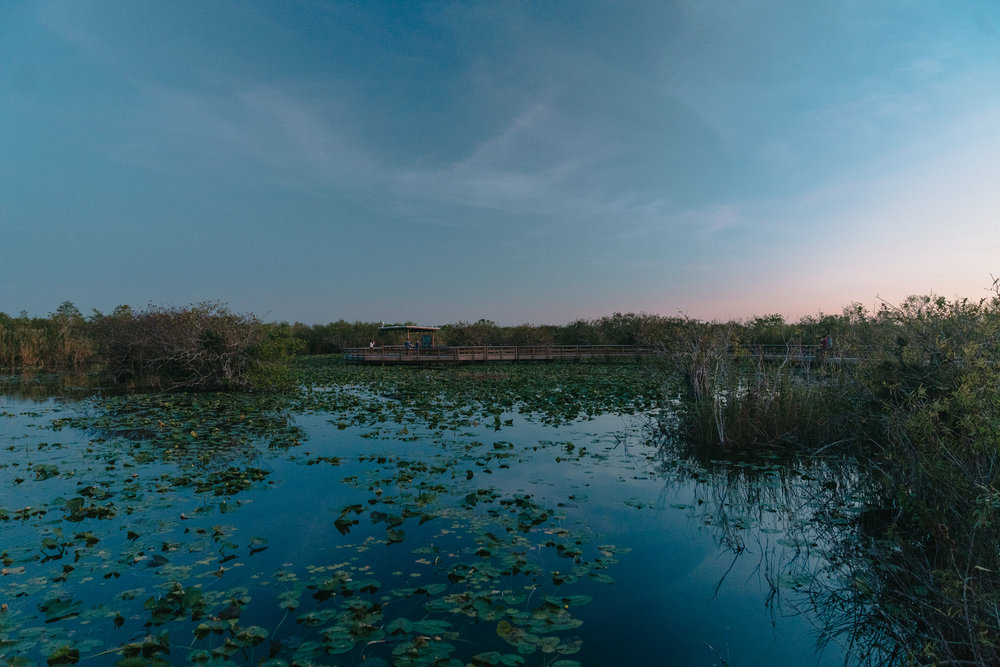 everglades-17.jpg