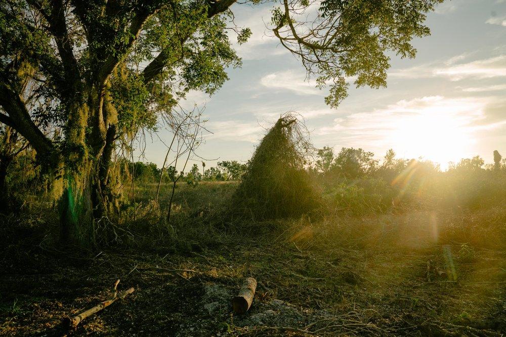 everglades-45.jpg