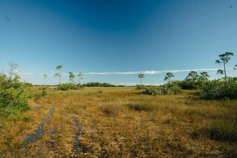 everglades-46.jpg