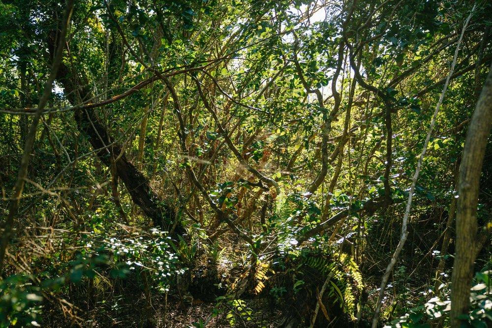 everglades-51.jpg