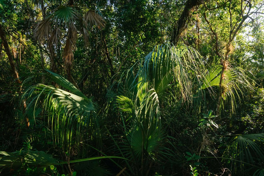 everglades-68.jpg