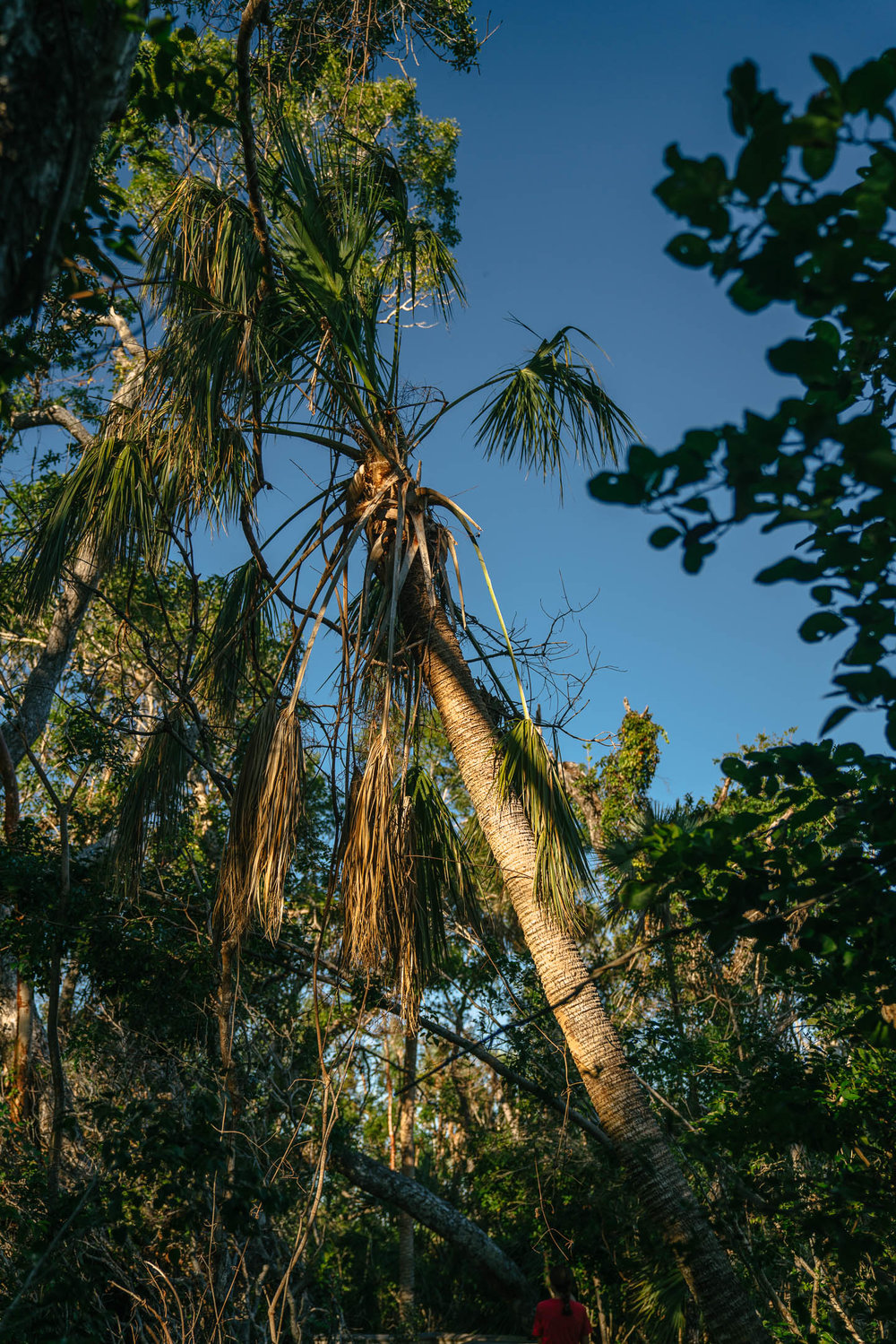 everglades-70.jpg