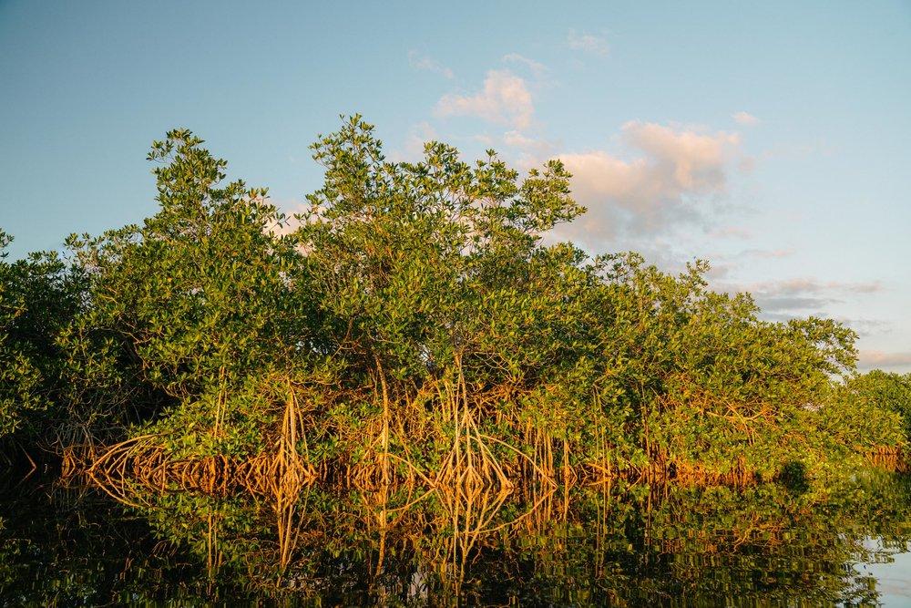 everglades-110.jpg