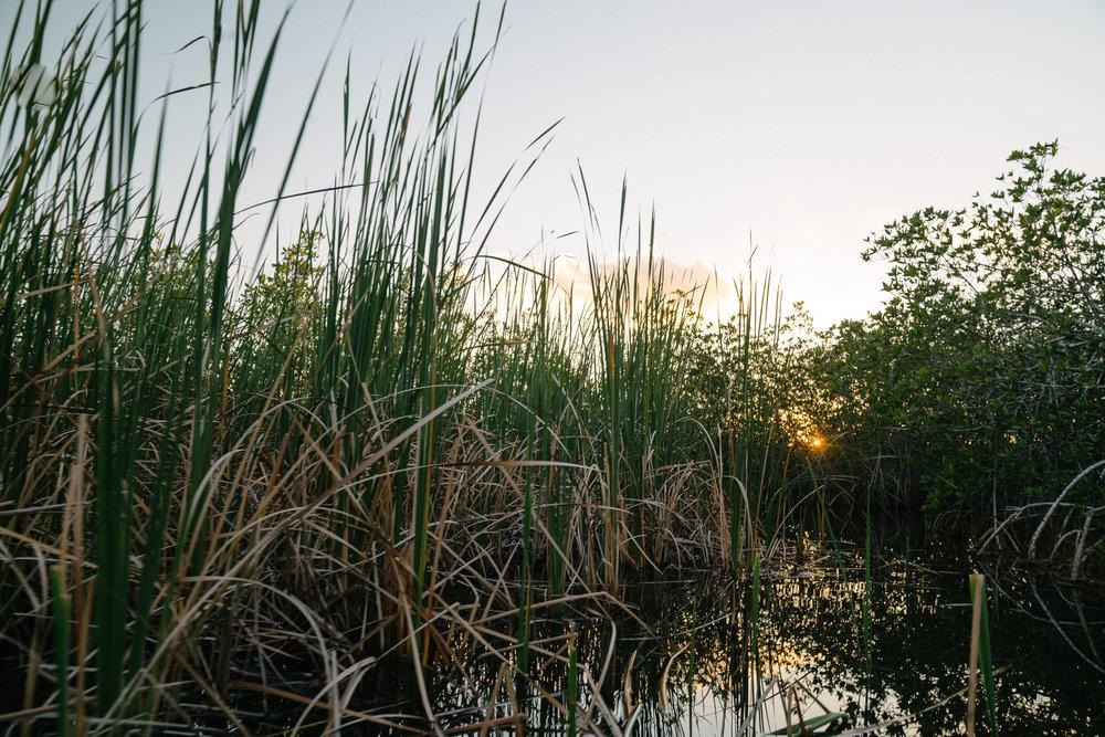 everglades-117.jpg