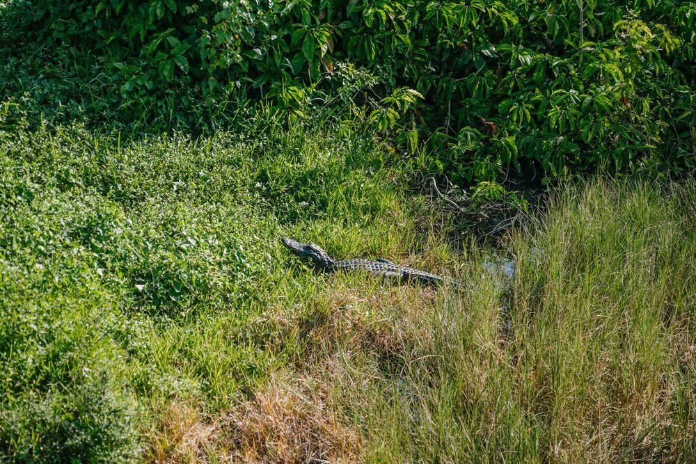 everglades-170.jpg