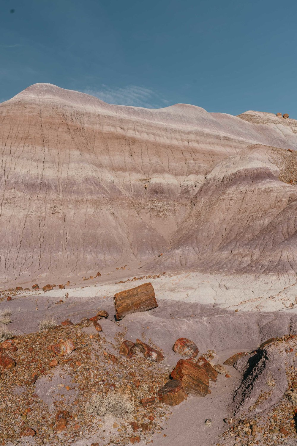 petrified forest-87.jpg