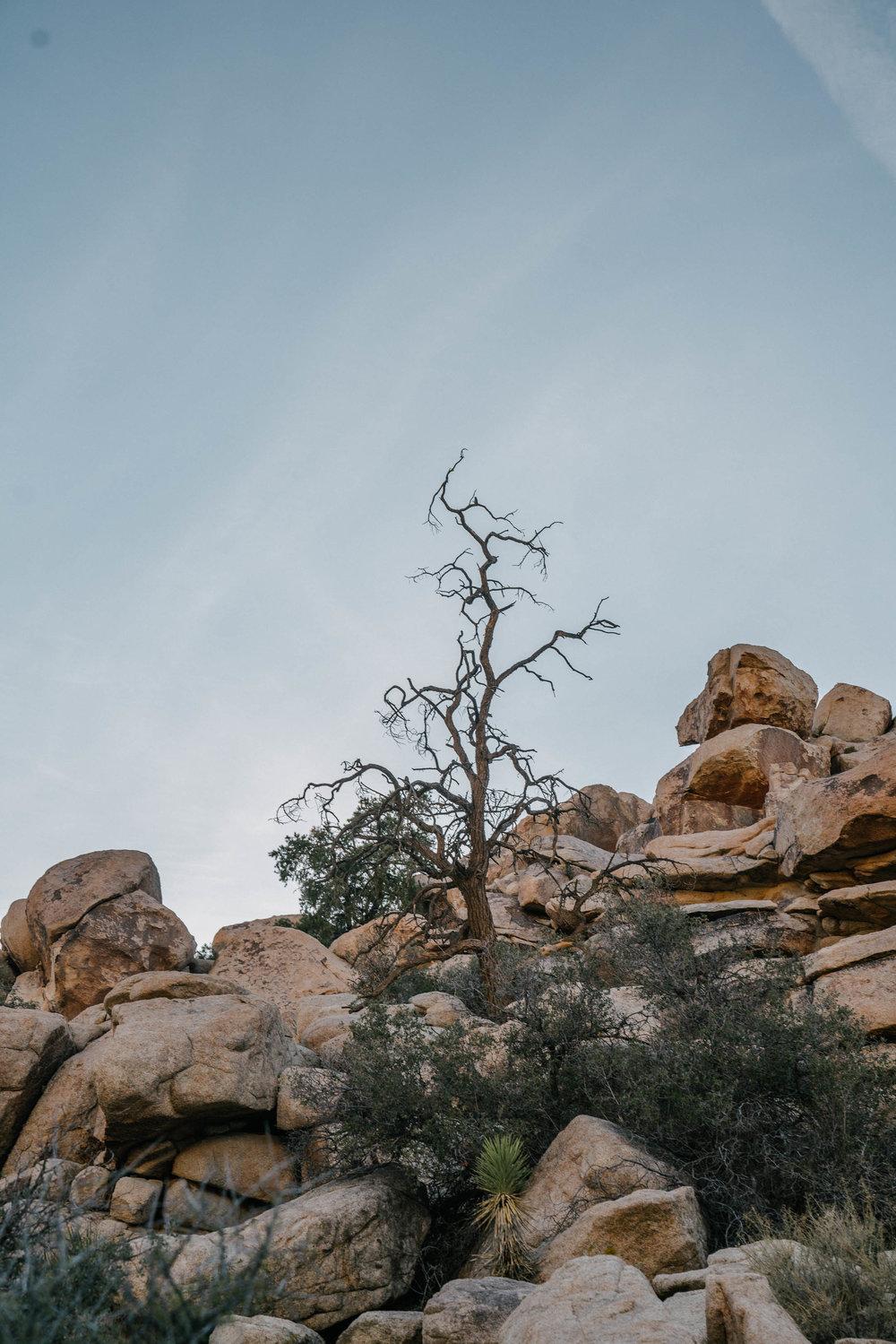 joshua-tree-4.jpg