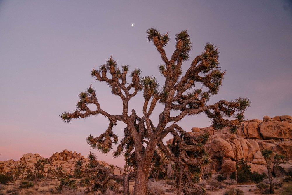 joshua-tree-83.jpg