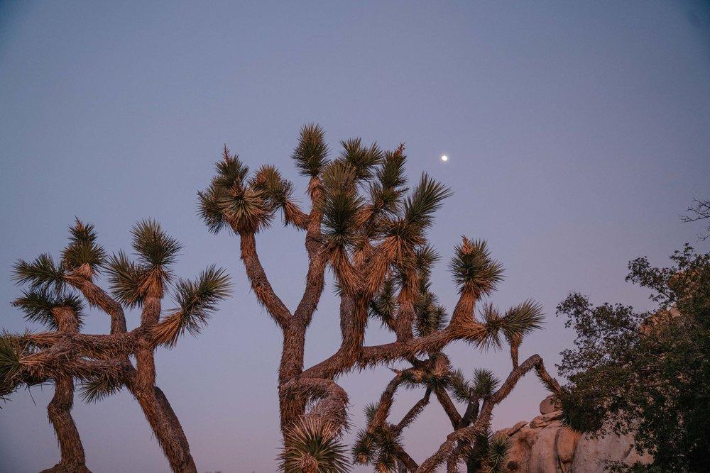 joshua-tree-91.jpg