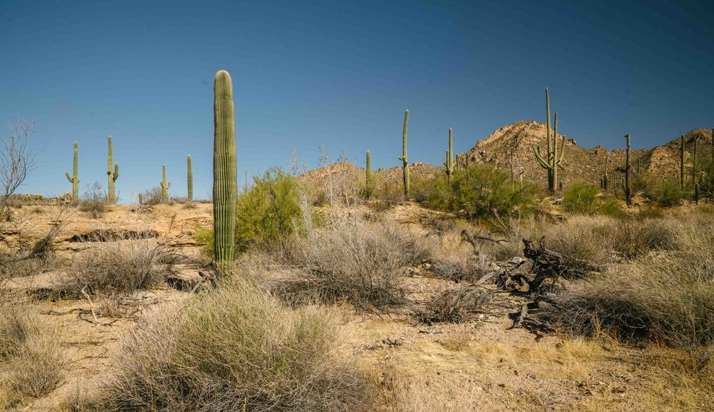 saguaro-2.jpg