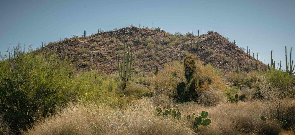 saguaro-7.jpg