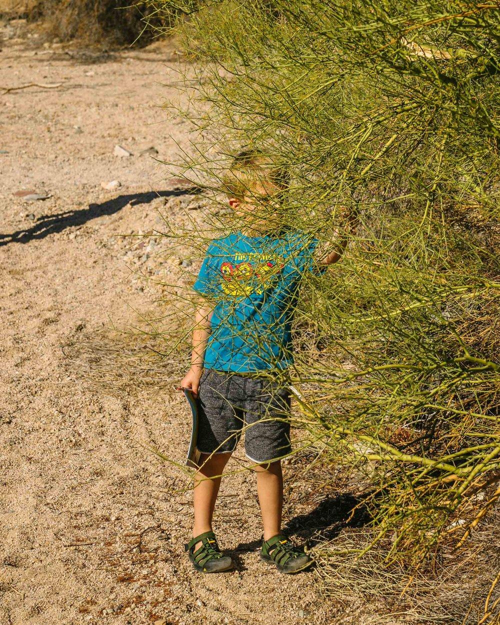 saguaro-3.jpg