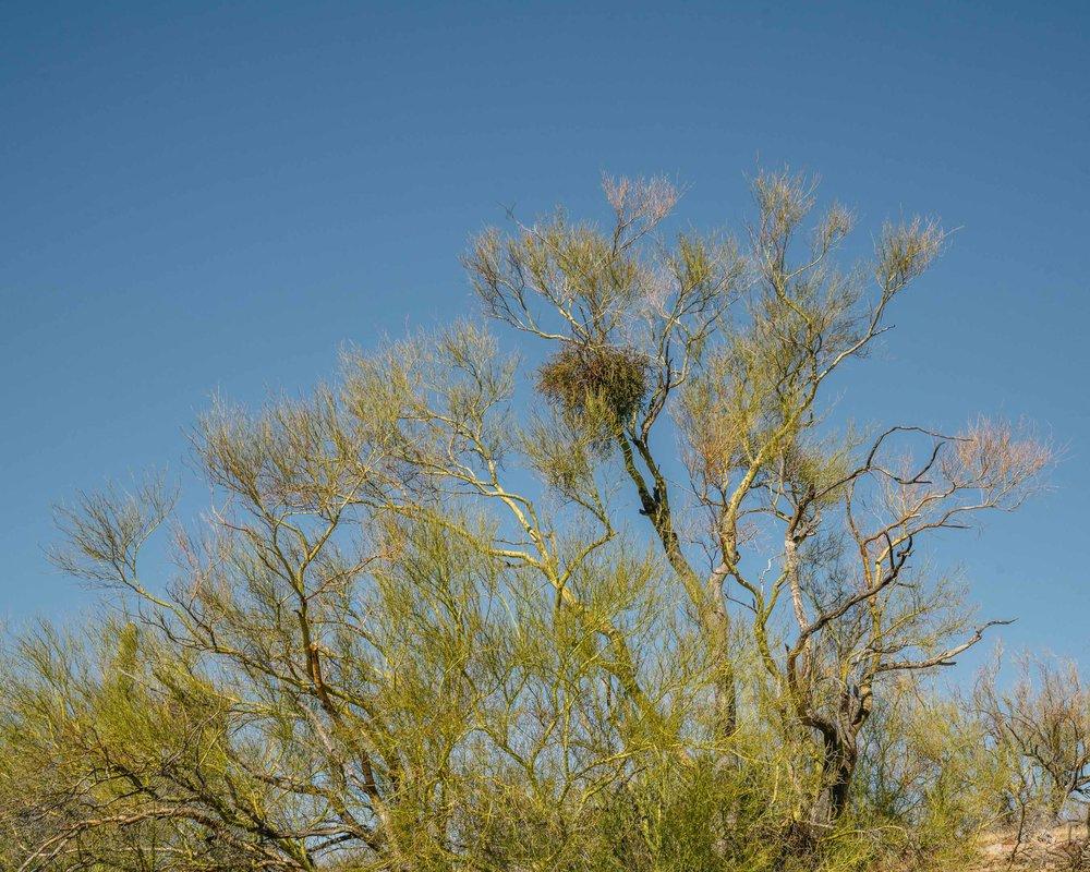 saguaro-4.jpg