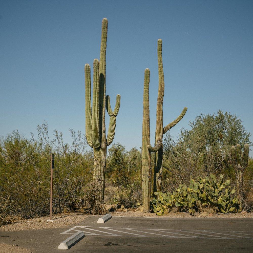 saguaro-8.jpg