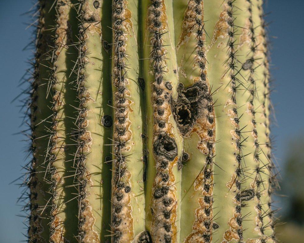saguaro-9.jpg