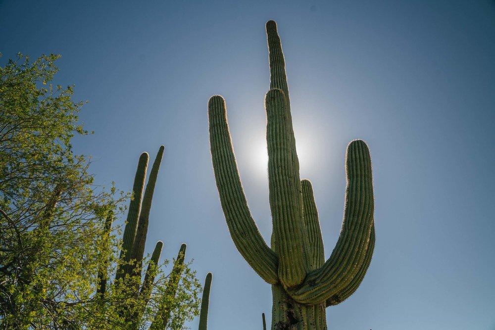 saguaro-19.jpg