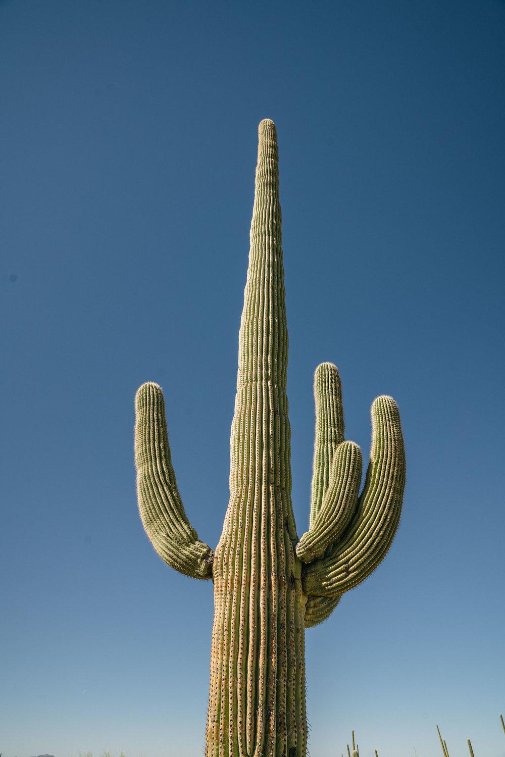 saguaro-20.jpg
